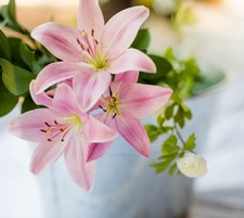 1 Bunch of Lilies, 7 stems
